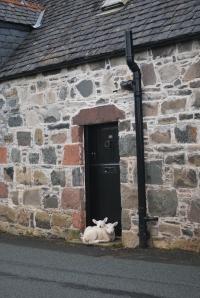 Sowells in Scotland 146